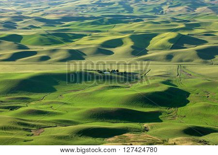 View of wheat fields from Steptoe butte in Palouse,Washington