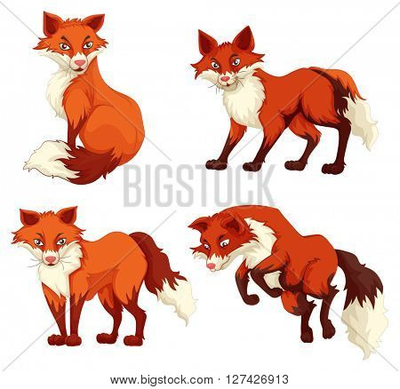 Four foxes with red fur illustration