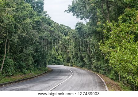 STORMS RIVER MOUTH SOUTH AFRICA - MARCH 1 2016: The road through dense forest from the entrance gate to the rest camp at Storms River Mouth