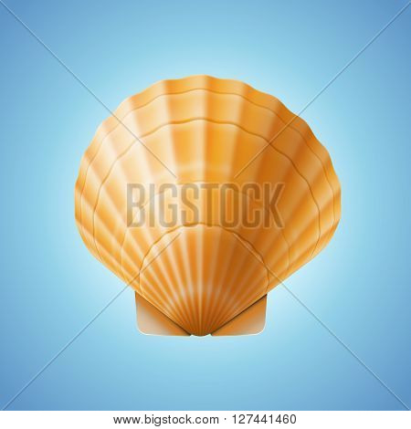 Realistic scallop seashell, isolated on blue background, vector illustration.