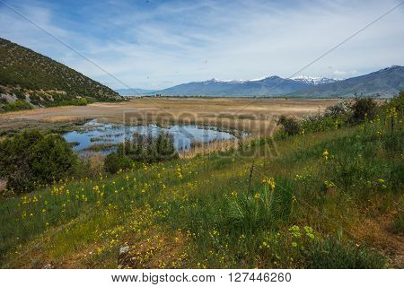 Flower Meadow On Slope Of Mountains And Lake Prespa, Greece