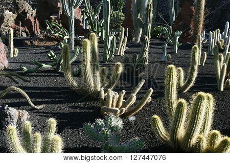 Europa, Spanien, Kanarische Inseln, Lanzarote, Kaktus Garten