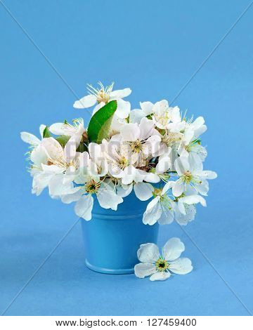 The beauty and fragrance of spring. white cherry blossom flower bouquet on light green background. Spring flowers - cherry branch in vase. Spring flowers isolated ongreen background. Card with spring flowers. Spring flowers border.