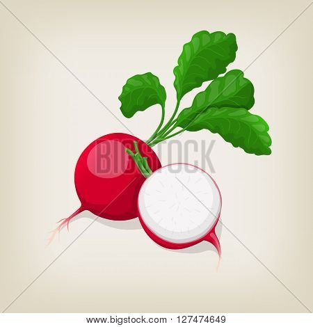 Whole and half radishes with leaves. Vector illustration.
