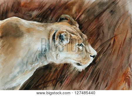 hunting lioness - watercolor painting of african wildlife with detailed paper texture