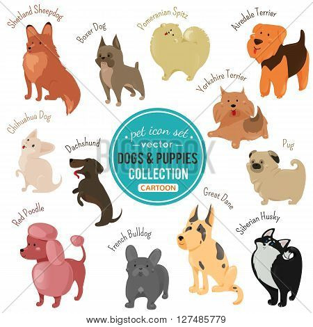 dogs and puppies depicting different fur color and breeds walking, siting and standing on white background. illustration for animal pet design. Flat cartoon style. Set of drawing mammal.