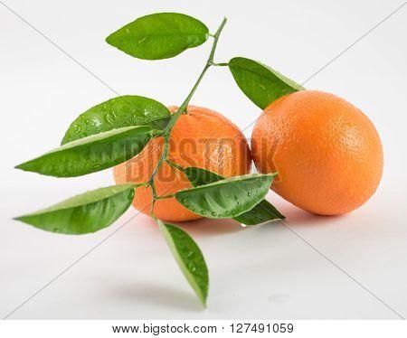 Two Mandarins Orange(tangerines) Isolated On White Background