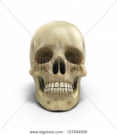 Human Skull On Isolated White Background 3D Render