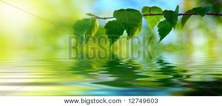 bladeren van berk en water