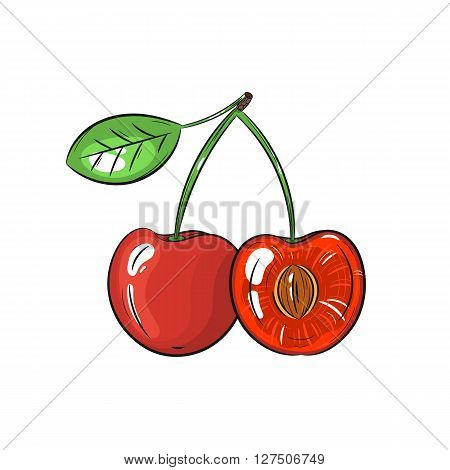 Vector cherry illustration. Slice of cherry, cherry isolated on white background. Vector sketch hand drawn fruit - stock vector