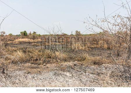 Ash Black Smut And Stubble. Burned Field Farm Concept