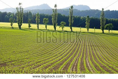 Picturesque nature rural landscape with plantation. Germany