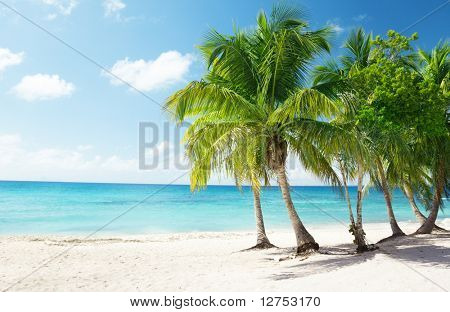 Caribbean sea and coconut palms