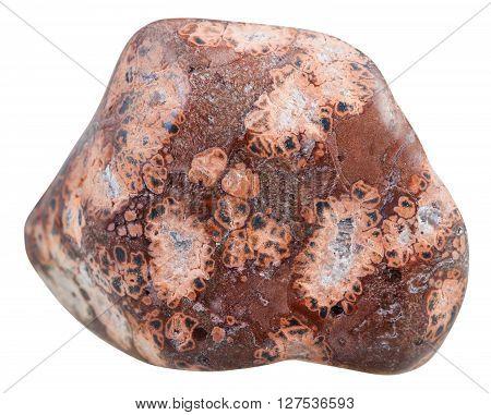 Polished Leopardskin Jasper (jaguar Stone) Gem