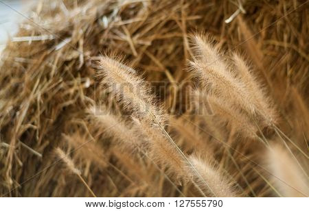 closeup of a haystack with a spike in the foreground
