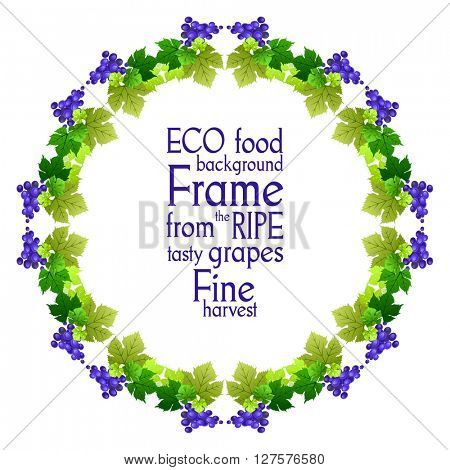 Round frame of beautiful ripe grapes. The natural design banner,ticket, leaflet and so on. Place for text. Isolated elements.