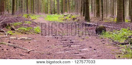 Footpath in the mixed forest in a sunny day summer Saarland / Germany XXL panoramic