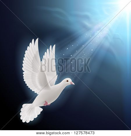 White dove flying in sunlight against dark blue sky as symbol of peace and hope
