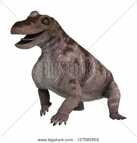 3D Rendering Dinosaur Keratocephalus On White