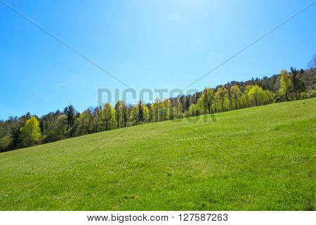 Green slope with clear blue sky, forest in the distance