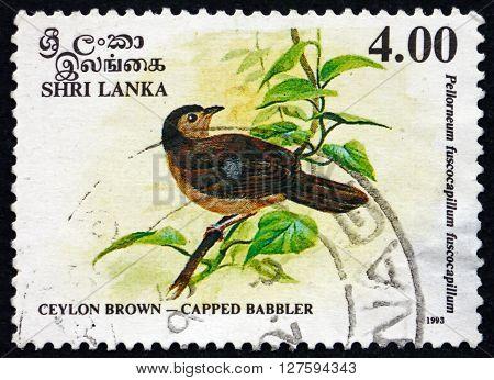 SRI LANKA - CIRCA 1993: a stamp printed in Sri Lanka shows Brown-capped Babbler Pellorneum Fuscocapillus is an Endemic Resident Breeding Bird in Sri Lanka circa 1993