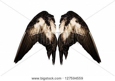 Clipped real duck wings on white background isolated back angel two pair