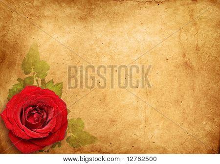 vintage rose , Old paper background