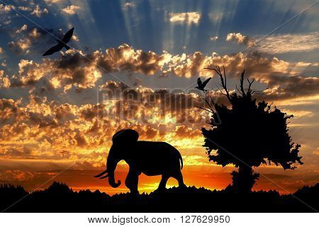 Jungle With Old Tree, Birds And Elephant On Golden Cloudy Sunset Background