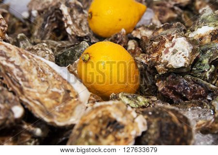 ice and lemon on oysters background pattern