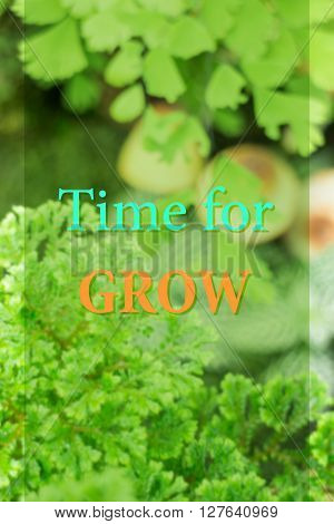 Time for growth. Inspirational quote stock photo