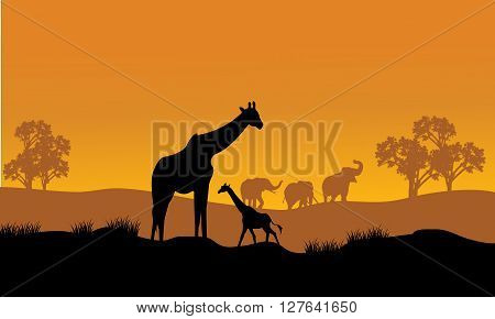 Wild african animals silhouettes in beautiful sunset