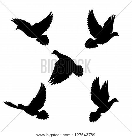 Five silhouette black doves fly in space