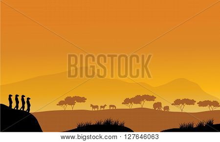 Beautiful meerkat silhouette at afternoon with orange backgrounds