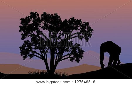 Silhouette of gorilla walking at the afternoon