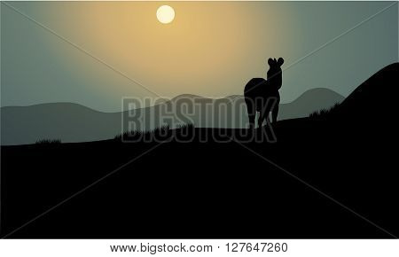 Silhouette of single zebra at the night