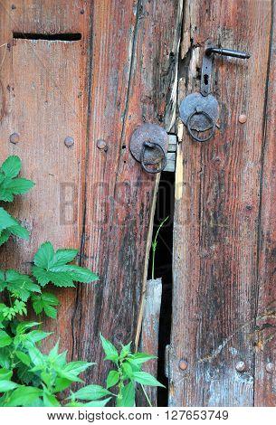Part of broken door and green plant