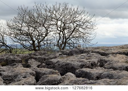 landscape of Malham Cove , limestone and bare trees poster
