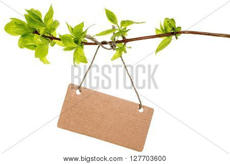 Tree branch with blank tag tied with string. Isolated on white background.