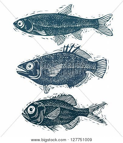 Set of vector fishes different underwater species. Organic seafood graphic symbols collection freshwater fishes sea bass sea bream and salmon.