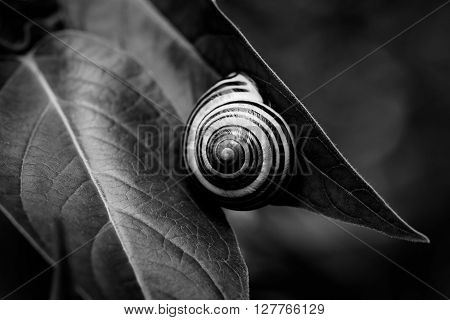 close-up of a snail attached to a leaf in summertime