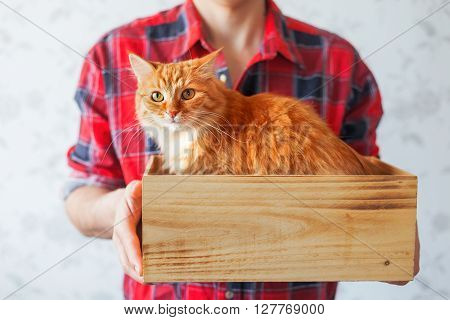 Man in red tartan plaid shirt holds a wooden box with cute ginger cat. Symbol of adopting animals. Place for text.