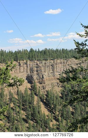 Forest treeline on the Chasm ridge wall