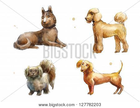 Set of watercolor brown dogs. Watercolor hand drawn sketch of Husky Poodle Dachshund Pekingese.