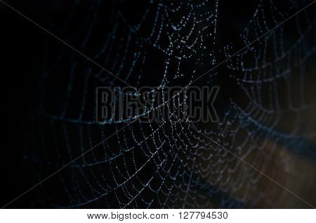 Beautiful wet spider web with water drops on a dark background studio