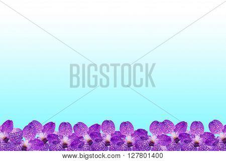 Purple Orchid flower frame on cyan background