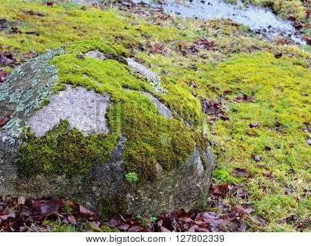 Patches of Soft Damp Green Moss on Boulder and Ground