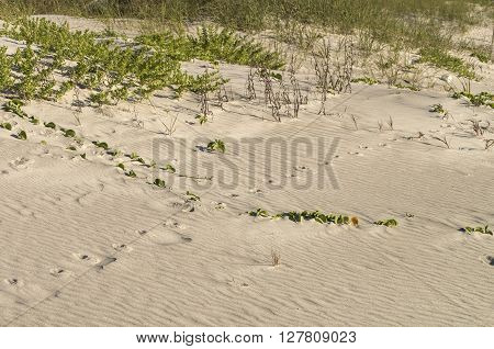 Fresh footprints dot a beach in Cocao Beach Florida on a warm spring morning