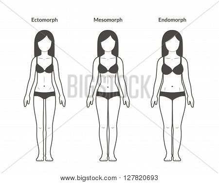 Female body types: Ectomorph Mesomorph and Endomorph. Skinny fit and overweight build. Fitness and health illustration.