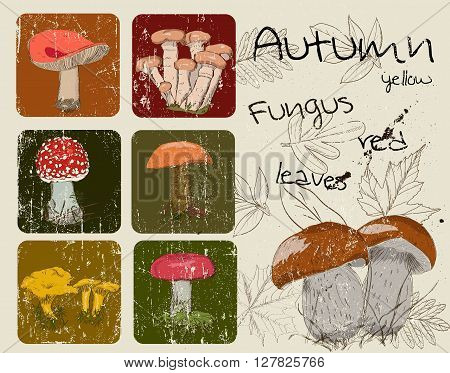 Vintage poster with autumn plants and fungis. Vector illustration EPS8