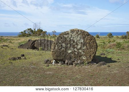 Rano Raraku. Abandoned and partially buried statue on the slopes of the extinct volcano which was the quarry from which the Moai statues of Rapa Nui (Easter Island) were carved.